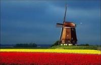 praca-w-holandii-bez-jezyka